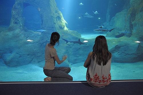 Twee kinderen kijken door het glas van een aquarium in Musee de la Mer.