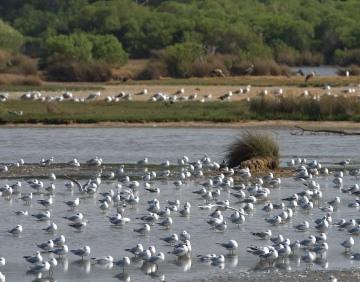 Vogels in het water in een natuurgebied aan de Atlantische Kust in Frankrijk.