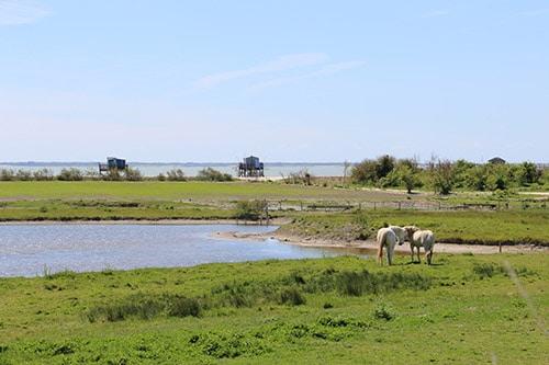 Gras, een meer en paarden op het eiland Madame in Frankrijk.