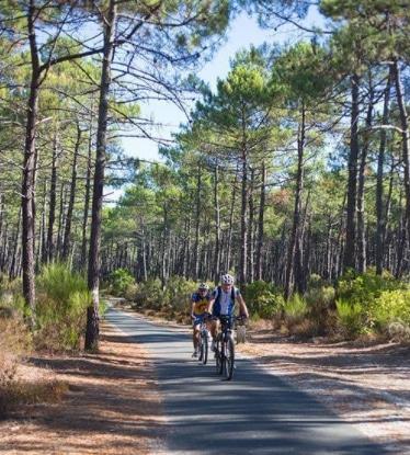 Twee fietsers rijden door een [pijnboombos] dennenbos in de Gironde in Frankrijk.