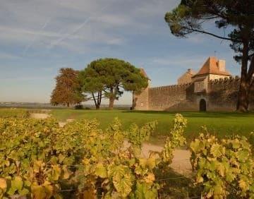 Een wijngaard in Bordeaux.