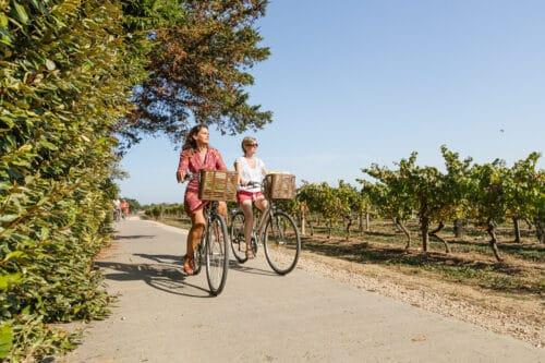 twee fietsers in de wijngaarden van Ile de Re.