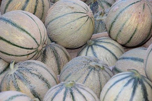 Een berg van Charentais-meloenen.